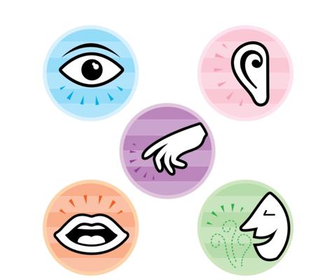 dessins simplifiés des membres reliés aux sens : un oeil, une oreille,une main, une bouche, un nez