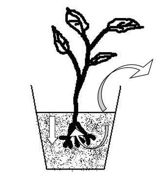schéma en coupe d'une plante dans un pot