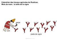Travaux Vigne Calendrier.Calendrier Des Travaux Agricoles Du Rustican Mois De Mars